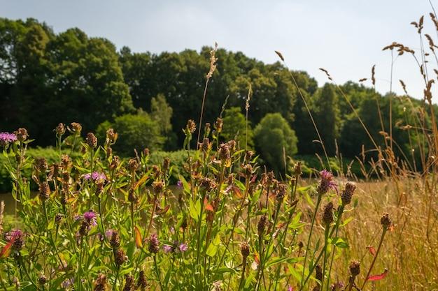 Selektiver fokusschuss von purpurroten trockenen blumen in der natur