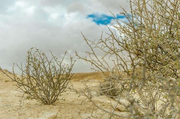 Selektiver fokusschuss von trockenen sträuchern auf dem sand mit einem bewölkten grauen himmel