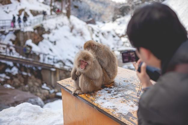 Selektiver fokusschuss von zwei makaken, die auf einem holztisch sitzen