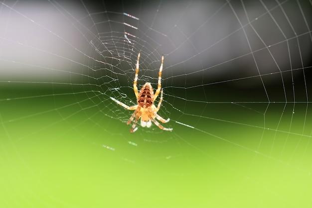 Selektiver nahaufnahmefokus der nahaufnahme einer spinne auf dem netz auf einem grünen hintergrund