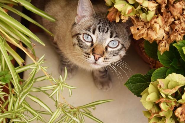 Selektiver nahaufnahmeschuss einer niedlichen grauen katze mit blauen augen, die sich hinter den pflanzen verstecken