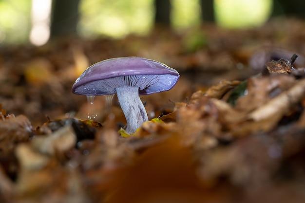 Selektiver nahfokus eines wilden pilzes, der in einem wald wächst, der von blättern umgeben ist
