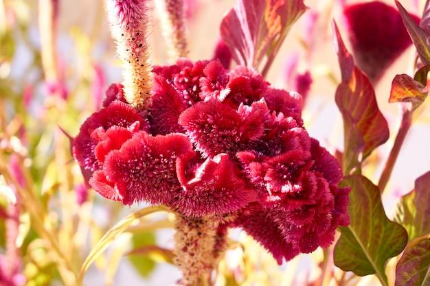 Seltene exotische rote blume in einem garten