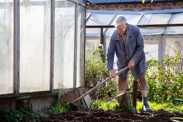Senior gärtner pflanzt kartoffeln