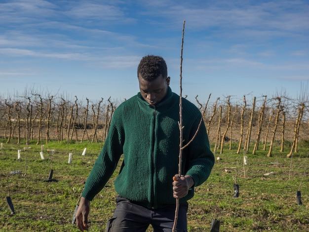 Serie eines afrikanischen bauern, der obstbäume an einem sonnigen wintertag pflanzt. landwirtschaftskonzept.