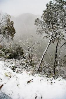 Serra de santa catarina, südliche region brasiliens, eines der größten schneephänomene in seiner gesamten geschichte.