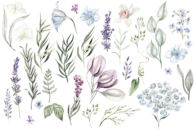 Set aquarellkräuter und zweige wildblumen auf weißem hintergrund