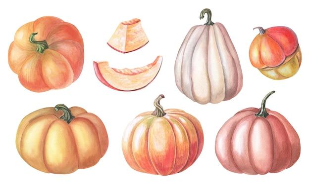Set aus orangefarbenem, rotem, gelbem kürbis, kürbis. aquarellillustration mit orange, rotem, gelbem gemüse