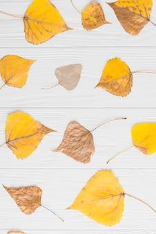Set Herbstblätter