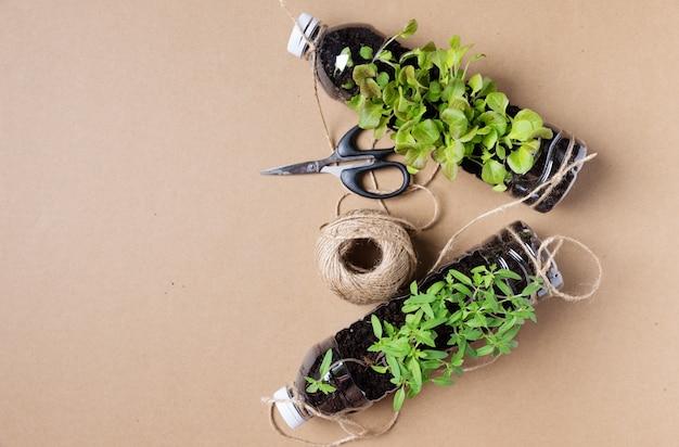 Set junger tomatensetzlinge in recycelten plastikflaschen.umweltbewusstsein ist wichtig, um unseren planeten zu retten