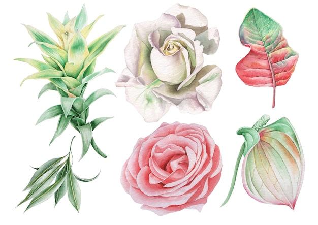 Set mit aquarellblumen und blättern. rose. bromelie. anthurium. handgemalt.