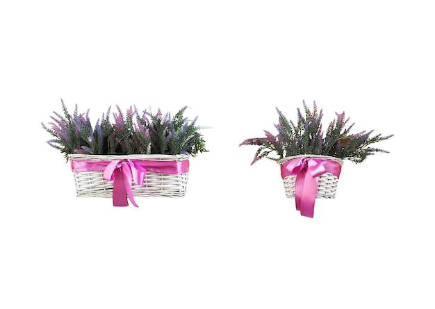 Set weidenkörbe mit lavendelblüten auf weißem hintergrund. florale designelemente