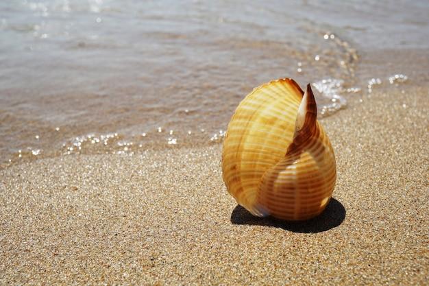 Shell auf dem sand am meer liegen