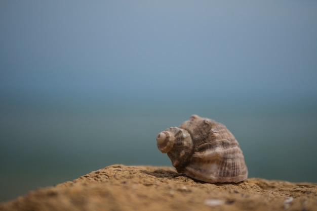 Shell der rapana auf stein auf dem hintergrund des meeres