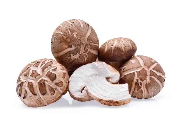 Shiitake-pilze auf weißem hintergrund