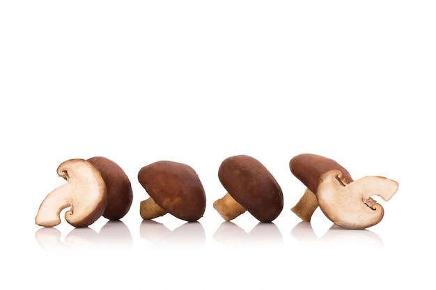 Shiitake-pilze lokalisiert auf dem weißen hintergrund