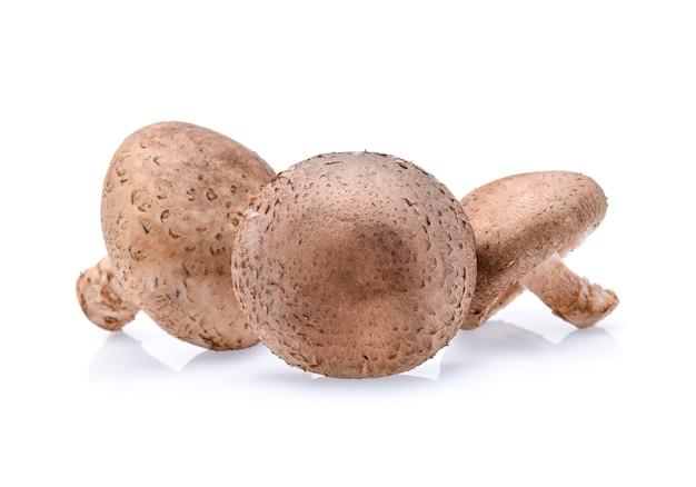 Shiitake-pilze lokalisiert auf weiß