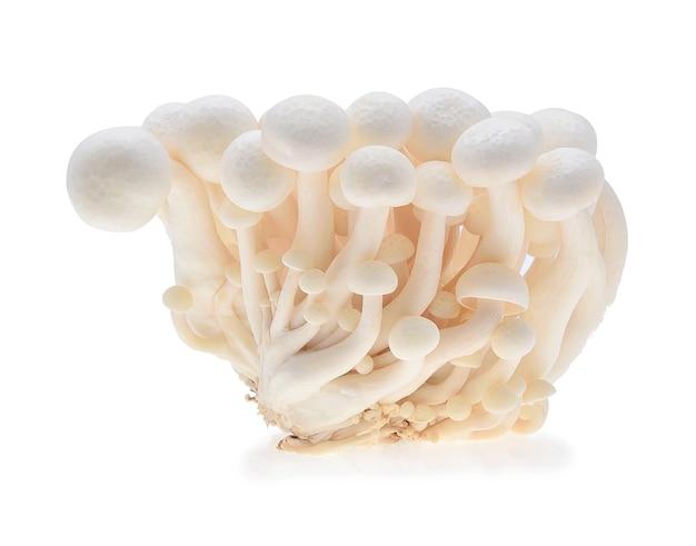 Shimeji-pilz lokalisiert auf weißem hintergrund