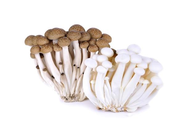 Shimeji pilze braune und weiße sorten auf weiß isoliert
