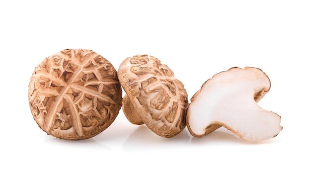 Shitake-pilz auf weißem hintergrund