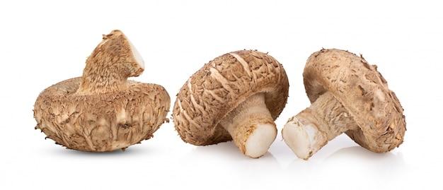 Shitake-pilz auf weißer voller schärfentiefe
