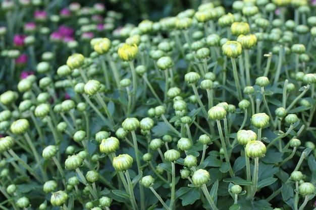 Shop für gartenpflanzen