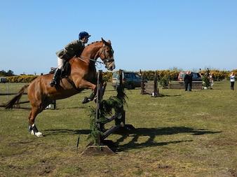 Show dundonald Springreiter Pferd