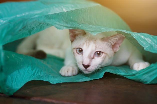 Siamcat, der in der grünen klaren plastiktasche spielt