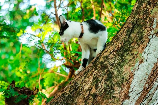 Siamesische katzen klettern bäume, um eichhörnchen zu fangen. es kann aber nicht herunterklettern
