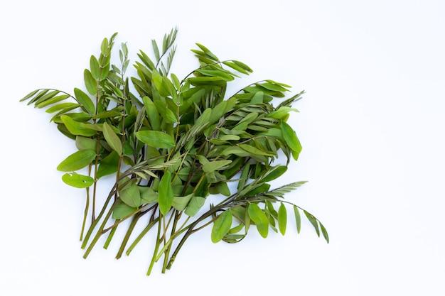 Siamesische sennablätter auf weißer oberfläche