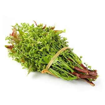 Siamesischer neem baum, nim, margosa lokalisiert auf weißem hintergrund.