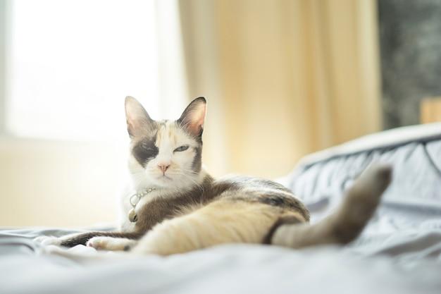 Siamkatze lag auf dem gemütlichen schlafzimmer