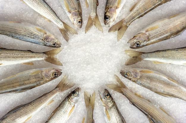 Sibirische fluss-äsche zeichnete sich im kreis auf weißen grobkörnigen salzkristallen aus
