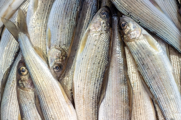 Sibirische flussfisch-graylingnahaufnahme