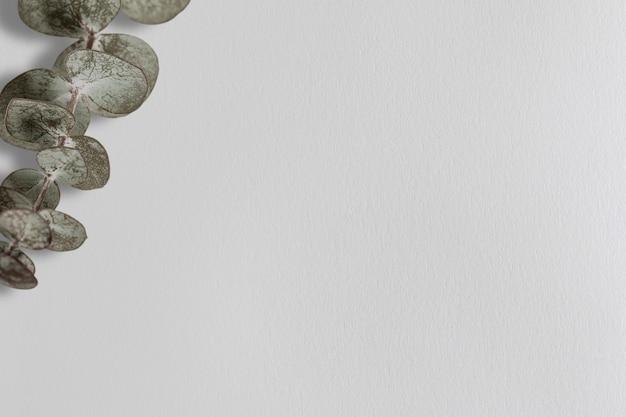 Silberdollar-eukalyptus-hintergrund