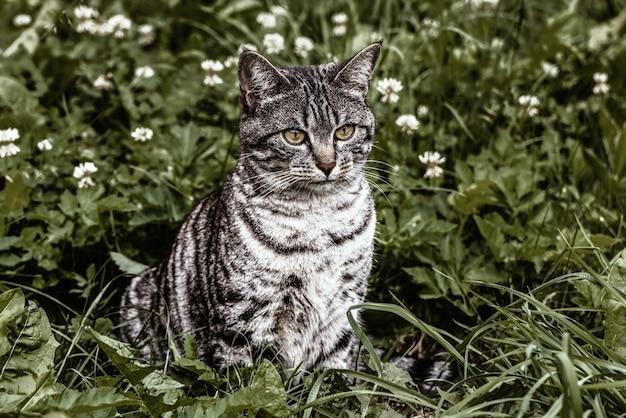 Silberne katze auf grünen gräsern
