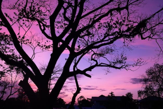 Silhouette bäume mit schönem himmelshintergrund, wald