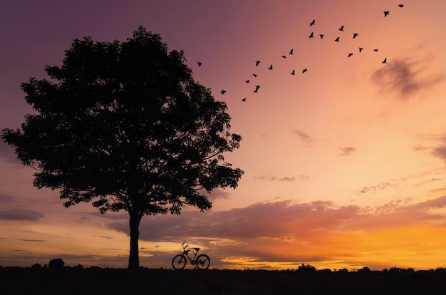Silhouette baum und fahrrad