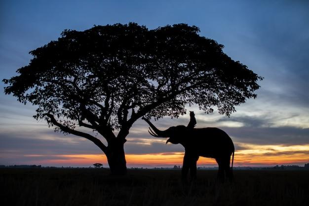 Silhouette der elefanten in thailand bei sonnenaufgang