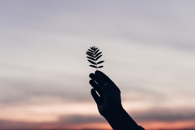 Silhouette des flugblatts in der hand gegen blauen himmel