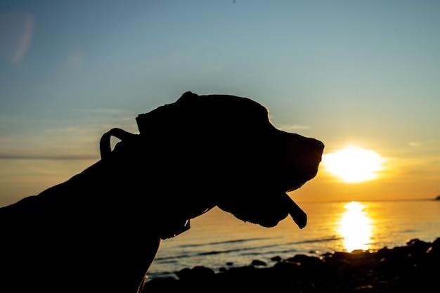 Silhouette eines dalmatinischen hundes am strand bei sonnenuntergang an der küste