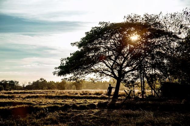 Silhouette eines mannes und eines baumes in einem sonnenuntergang