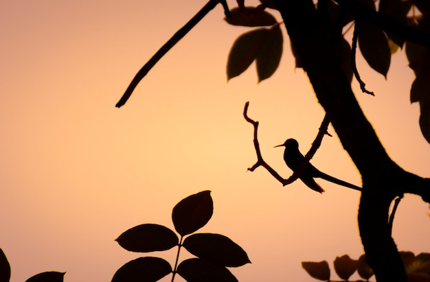 Silhouette eines vogels, der auf einem baum sitzt
