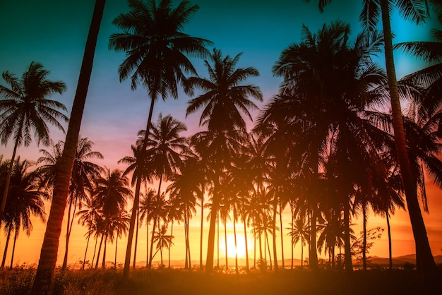 Silhouette kokospalmen am strand bei sonnenuntergang. vintage-ton.