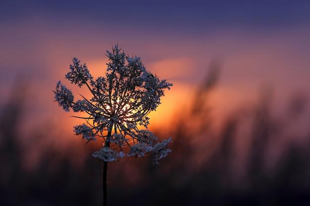 Silhouette pflanzen blühen gegen die untergehende sonne