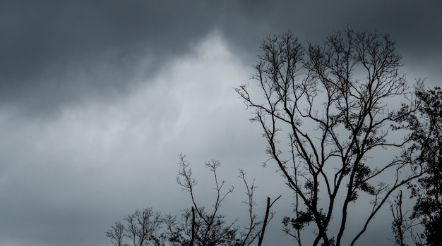 Silhouette toten baum auf dunklem dramatischem himmel und schwarzen wolken