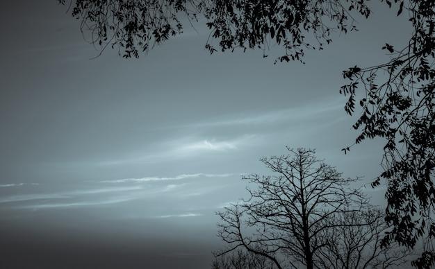 Silhouette toten baum auf dunklem dramatischem himmel und weißem wolkenhintergrund für tod und frieden. halloween tag hintergrund. verzweiflung und hoffnungsloses konzept. traurig von der natur. tod und trauriger gefühlshintergrund.