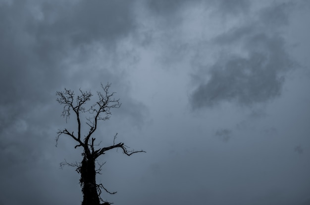 Silhouette toten baum und zweig auf grauem himmel