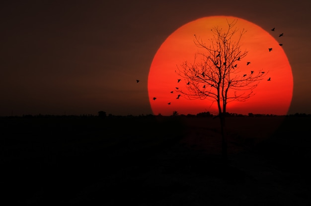 Silhouette trockener baum sonnenuntergang mit vögeln flog zurück zum nest