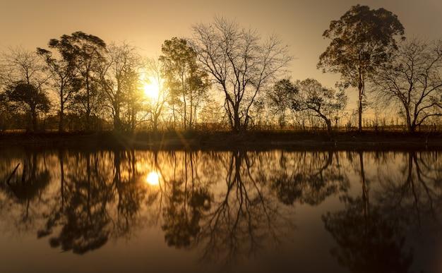 Silhouette von blattlosen bäumen in der nähe des wassers mit der sonne, die durch die zweige scheint